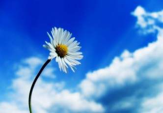 beautiful_sky_white_flower-normal